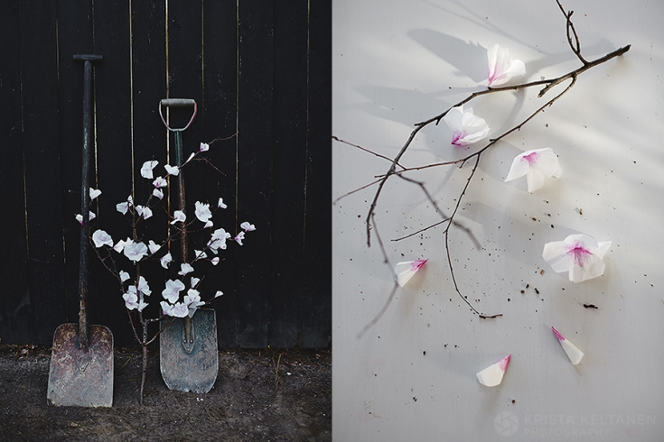 04-kinfolk-cherry-blossom-garden-photo-krista-keltanen-03